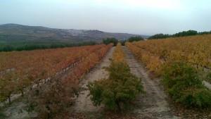 høst på Marenas