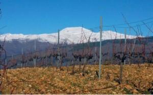 vinbladet 4